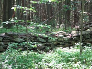 Old rock wall in the forest