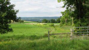 Arcangeli Farm