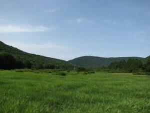 Large field near NY 10
