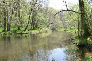Mud Creek