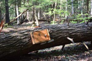 Fallen tree and regsiter