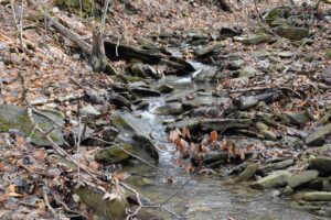 Goff Creek - FLT M10