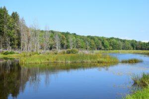 Pond on Bill Morris Rd