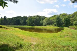 Pond next to campsite off Bill Morris Rd