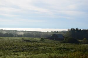 Fog rising from the forest behind a barn along Rushford Rd