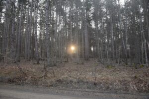 Sun glowing through the trees on Stebbins Rd at the trailhead